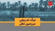 ویدئو | مرگِ شور سرزمین نخلها | بلایی که بیآبی سر مزارع خوزستان آورده است