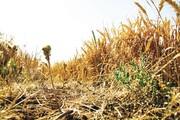 کاهش ۴۰درصدی بارشها در سال گذشته آبی زنجان