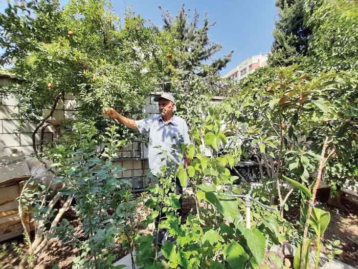همنشینی با درختان سرسبز