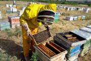 کاهش تولید عسل در آذربایجان شرقی
