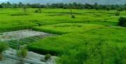 اراضی کشاورزی گیلان سنددار میشوند