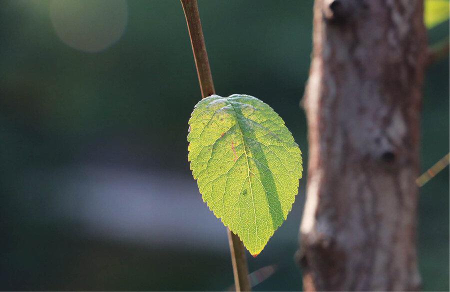 درخت ریشهدار