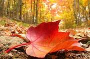 خورشید امشب به اعتدال پاییزی می رسد