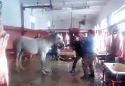 تصاویر | بازداشت عامل ذبح و توزیع گوشت الاغ و اسب در تهران | ۵۰۰ کیلو گوشت غیرمجاز معدوم شد