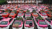 ببینید | تبدیل تاکسیها به باغچه سبزیجات در بانکوک