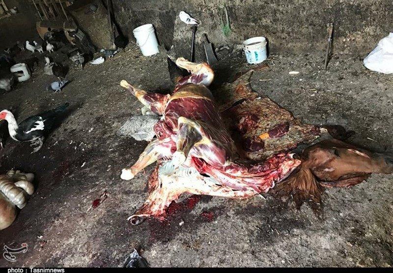 ذبح اسب و الاغ