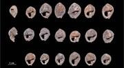قدیمیترین جواهراتی که کشف شدهاند