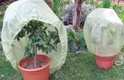 فوتوفن آمادهسازی گیاهان برای فصل سرما
