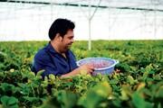 سهم رو به افزایش گلخانهها از کشاورزی