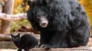 ببینید | رویارویی عجیب خرس با گربه و نتیجه شگفتانگیز آن