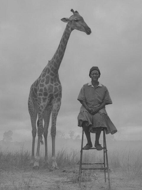 انسانها و حیوانات دردمند در یک قاب | داستان چند عکس