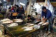 گرانی ۱۰۰ درصدی ماهی از مهر پارسال