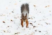 عکس روز| سنجاب و برف