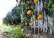 هشدار زردرنگ هواشناسی برای ۸ استان | دمای هوا فردا و پسفردا به زیر صفر درجه میرسد! | خطر یخزدگی محصولات کشاورزی