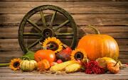 ۵ میوه جادویی پاییزی با خواص منحصر به فرد