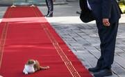 عکس | چرت زدن گربه بازیگوش روی فرش قرمز استقبال از مهمان خارجی!