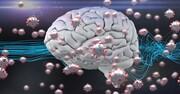 کووید-۱۹ چطور سلولهای مغزی را تخریب میکند؟